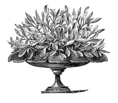 Royalty Free Images - Victorian Urns - Garden - Graphics Fairy
