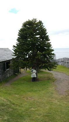 Fuerte Bulnes, Estrecho de Magallanes, Chile. Plants, Strong, Places, Plant, Planets