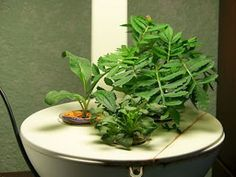 1000 Images About Aerogarden Diy On Pinterest Seed Pods 400 x 300