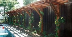 Handmade trellis for grapevines   Trellis, Vines and Arbors