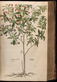 Image of Fuchs-1542-425