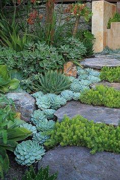 La succulente se pose en parterre dans le jardin et les rocailles