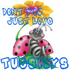 images of tuesday morning Good Morning Tuesday Images, Good Morning All, Good Morning Texts, Tuesday Morning, Good Night Quotes, Morning Quotes, Tuesday Greetings, Good Morning Text Messages, Happy Tuesday Quotes