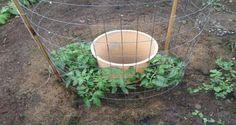 une-idee-de-genie-pour-faire-pousser-des-tomates