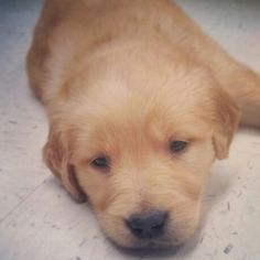 My Hudson boy too precious!!!