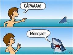 Why do I find shark jokes so funny? Funny Shit, Haha Funny, Hilarious, Funny Stuff, Crazy Funny, Fun Funny, Funny Things, Very Funny Pictures, Funny Images