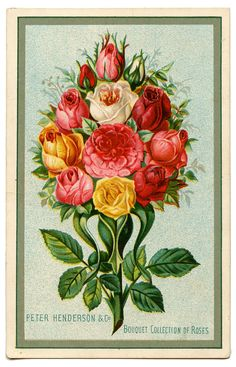 Flowers in this style, like a vintage seed packet or something. For my foot.
