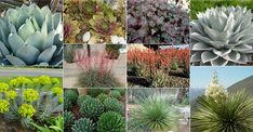 These 10 cold-hardy succulents can handle low temperatures, many of them down to 0 and even -20 degrees Fahrenheit (-18 and even...