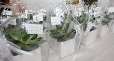 Echeverie confezionate con vaso di ceramica, shopper, bigliettino personalizzato e scatolina con confetti
