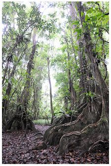 Belize Rainforest - I really enjoyed my time here. We loved the rainforest and exploring the local caves.