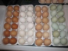 Chart of which chickens lay which color eggs... tip: you can  tell what color the egg will be by the earlobe color of the hen!