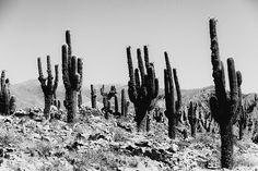 Pampa Cactus Print #7