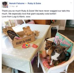 Meet Our April Duke Box Doggies. #dogsofpinterest #dogsofinstagram #dogs #puppy #puppies #dogoftheday