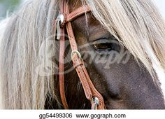 """Gypsy horse Portrait""- Horse Stock Photo from Gograph.com"
