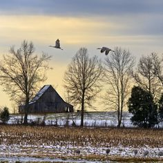 Sandhill Cranes in Kentucky  By: Sheila Reeves