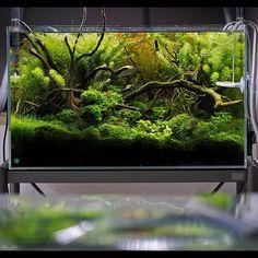 #aquascape #aquascaping #green #plants #planted #plan #nature #design https://m.facebook.com/aquajam 11