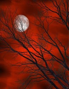 Red clouds, black tree, White moon.