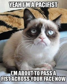 """Cats are funny. Grumpy cats are insane."" Grumpy cats are serious and funny. Funny memes featuring grumpy cats have been curated in one place. Funny cat memes for leisure."