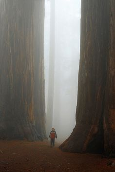 A LAND OF GIANTS in Giant Fog - want to go there again, will be magical for the kids