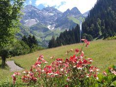 Alpen flora  Oberstdorf DL
