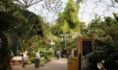 The Eden Project is one of Cornwall's go to attractions.  For a day out with family or friends, it never fails to disappoint.