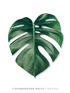 Monstera Leaf Art Print by Nordik - X-Small Leaf Prints, Art Prints, Doodle Drawing, Plant Painting, Painting Art, Monstera Deliciosa, Monstera Leaves, Leaf Art, Tropical Leaves
