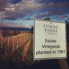 What December looks like in BC wine country.