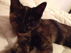 Coco. She 10 weeks
