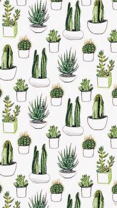 Cactus succulents iPhone wallpaper background lockscreen