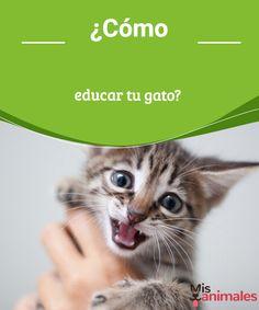 ¿Cómo educar tu gato? Aprende todos los secretos para educar a tu gato y lograr que tu felino viva feliz en tu compañía y tenga una existencia plena y alegre. #educar #gato #consejos #secretos