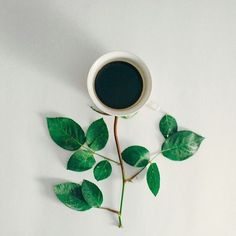 8 Simple and Stylish Tips Can Change Your Life: Coffee Flatlay Photography black coffee background. Coffee Menu, Coffee Signs, Coffee Cafe, My Coffee, Coffee Drinks, Morning Coffee, Coffee Shop, Coffee Break, Coffee Creamer