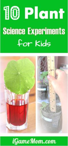 10 plant science experiments for kids - great for outdoor gardening or kitchen science activities, and fun spring and summer science projects for kids. They are also good for school science fair projects, from preschool to grade 5