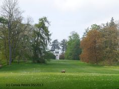 Putbus - Schloßpark I