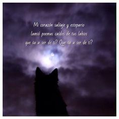 Miguel Bosé, Como un Lobo