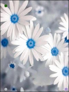 Ice Blue And White Flowers Garden Landscaping, Landscaping Ideas, White Flowers, Blue And White, Daisy, Landscape, Beautiful, Modern, Plants
