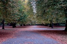 Autumn, Christchurch Botanic Gardens
