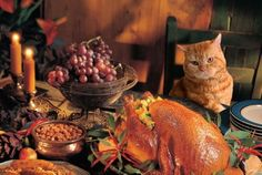 A Kitty With Better Table Manners Than Many Humans Thanksgiving Holiday Pictures