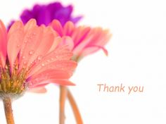 thank you with gerberas