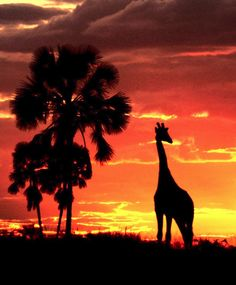African safari-there's something so majestical about seeing animals in their freedom