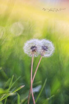 Photo Soft Hug by MariaCristina Casati on 500px