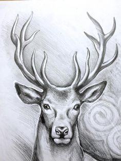 ORIGINAL deer art stag pencil drawing graphite home decor illustration animal art gift wall decor Pencil Drawings Of Animals, Animal Sketches, Art Drawings Sketches, Nature Sketches Pencil, Realistic Animal Drawings, Deer Drawing, Gift Drawing, Drawing Drawing, Arte Do Harry Potter