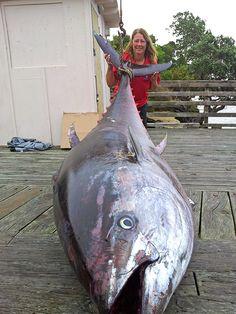 tuna - Donna Pascoe caught a beast, the biggest fish ever caught in New Zealand by a woman angler. It was recently approved by the IGFA as the all-tackle record and the women's 60 kg lb) line class record for Pacific bluefin tuna. Fishing Girls, Fishing Life, Sport Fishing, Women Fishing, Giant Fish, Big Fish, Tuna Fishing, Kayak Fishing, Monster Fishing