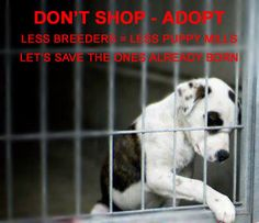 Don't Shop, Adopt! SOOO many wonderful puppies and amazing dogs out there that need a home!