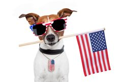 10 Fourth of July Pet Safety Tips - Fourth of July is a holiday full of so many wonderful things – warm weather, pools, barbecues, and fireworks. But many of these same things can be dangerous for our pets.
