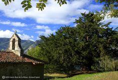 El tejo o texu es un árbol legendario en Asturias, y el de la fotografía más…¡Bermiego! http://www.turismoasturias.es/descubre/donde-ir/municipios/quiros… pic.twitter.com/nwVT8driDu