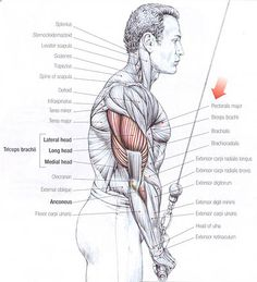 6 Arm Exercises To Explode Your Triceps Heads. A lot of people don