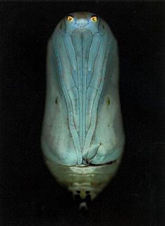 Pupa; from caterpillar to butterfly . . .  Things that Quicken the Heart: Animals in Art - Adam Fuss