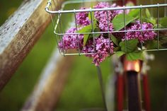 Oh, how I miss lilacs! Love this shot.