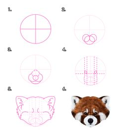 What You'll Be CreatingRed pandas and raccoons are commonly confused, they come from completely different families. Their striped tails and mask on the face make them similar on first sight, but...