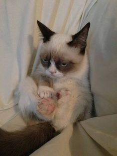 I would actually own a cat if I could have this one. Grumpy kitty is hilariously adorable! And i think he would be to busy hating the world to plot my death... cus thats what i feel other cats do... cats are evil.